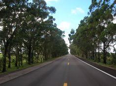 Estrada Cruzando Taim