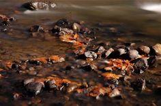 Nature morte dans la rivière Photo D Art, Photos, Artists, Fall Season, Pictures