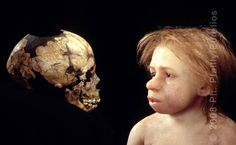 ( - p.mc.n.) Reconstruction of a child Neanderthal based on the cast of the skull