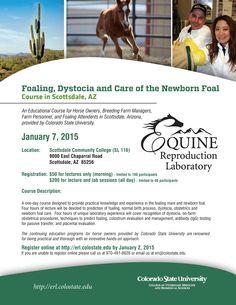 Equine Studies science subjects in junior college