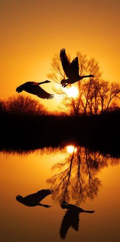 Birds Flying.. Sunset ❤