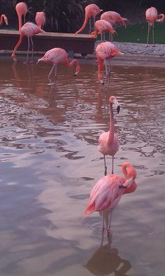 If I had to be an animal I would choose a flamingo because they are pink!