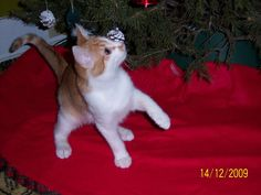 Kitten Renata was pregnant with when she found us