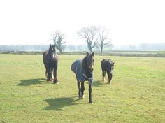 Flash, Polo & Poppy in our field.