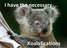 I have the necessary Koalafications!