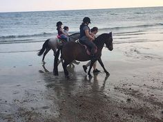 Loan pony wanted West Sussex My Horse, Horses, Wanted Ads, Pony, Animals, Pony Horse, Animales, Animaux, Ponies