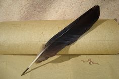 Black Crow Feather Quill Pen for Calligraphy (L46) via Etsy
