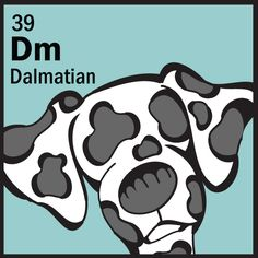Best in Breed - Non-Sporting Group -  Spotlights Ruffian the Dalmatian  http://www.thedogtable.com/the-dog-table/non-sporting/dalmatian/