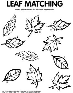 1000 Images About Colouring Pages Leaf Side Pieces On