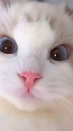 A cute little kitty girl ❤️😽