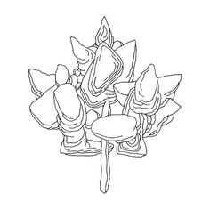 167 Best Canadian Maple Leaf Colouring Pages Images Leaf Coloring