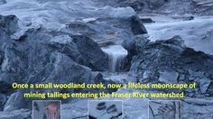 mt polley tailings disaster - Google Search