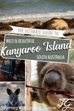 Kangaroo Island is South Australia's best wildlife destination. If you love Australian animals, you'll love visiting Kangaroo Island! Wild Life, South Australia, Australia Travel, Scuba Diving Australia, Australia Kangaroo, Australia Animals, Kangaroo Island, Beach Hotels, Beach Resorts