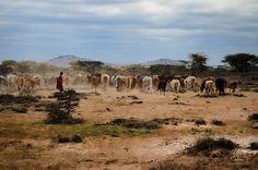 Kenia - Loita Hills