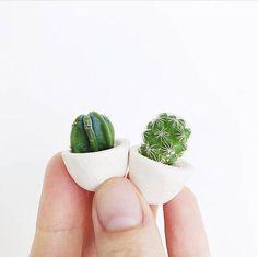 Mini Cactus and Mini Planter Lino Handmade Ceramic Planter Mini Cactus Cactus Plant Cactus Plan Jardinagem Cactus Flower, Cactus Cactus, Indoor Cactus, Mini Cactus Plants, Mini Cactus Garden, Flower Bookey, Flower Film, Baby Cactus, Flower Band