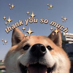 #meme #wholesome #wholesomememes #shibainu Cute Cat Memes, Cute Love Memes, Stupid Funny Memes, Funny Relatable Memes, Memes Humor, Jokes, Thank You Memes, Filipino Memes, Love You Meme