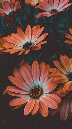 Marvelous Flower Wallpaper for any Sytle Your new iPhone wallpaper … – iPhone Wallpapers Wallpaper Flower, Sunflower Wallpaper, Flower Backgrounds, Wallpaper Backgrounds, Orange Wallpaper, Calming Backgrounds, Iphone Wallpapers, Tumblr Wallpaper, Screen Wallpaper