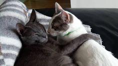 Gatos y Gatos 5