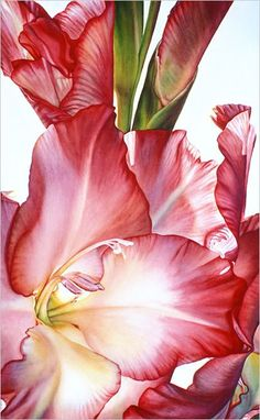Lisa Lopuck Watercolors - Incredible Color, Unbelievable Realism, Infitite Depth