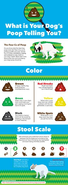 What can your dog's poop tell you about his health? How Often Should You Clean Up Dog Poop