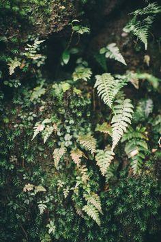 Ferns at Yakushima, Japan - Travel Photography — Sarah Katherine Davis Photography