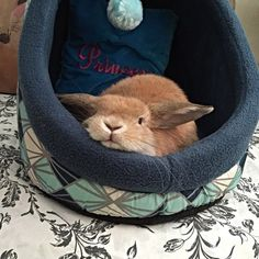 Bunny's chillin' in his bed.