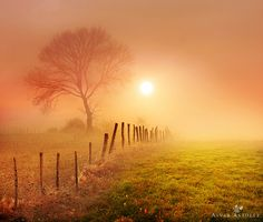 dawn's mist Alvar Astulez