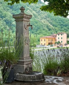 Photograph, Tuscan Lavender Fields, Water Fountain, Nature, Rustic Green, Photo