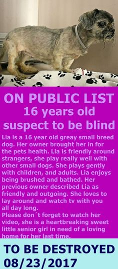 SUPER URGENT 08/14/17*  LIA. My **16 YRS OLD**  A1122844. I am a female gray shih tzu mix.  I am about 16 YEARS old.  OWNER SUR on 08/21/2017 eason stated was PET HEALTH.  http://nycdogs.urgentpodr.org/lia-a1122844/