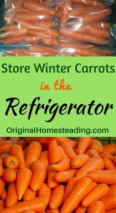 HOW to STORE CARROTS for WINTER : Learn How to keep all your little fingerling carrots tasting fresh and crunchy all winter long.Garden Fresh and So Easy to Store! How To Store Carrots, Growing Lettuce, Growing Tomatoes, Gardening Tips, Vegetable Gardening, Organic Gardening, Kitchen Gardening, Veggie Gardens, Flower Gardening