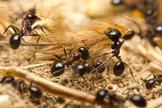 Ants need work-life balance, research suggests: The work habits of ants could provide valuable insight into making our societies more productive and sustainable, says a team researchers. https://www.sciencedaily.com/releases/2017/01/170111184106.htm?utm_source=rss&utm_medium=Sendible&utm_campaign=RSS