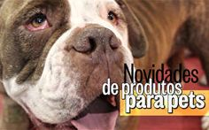 Novidades de produtos para pets - http://epoca.globo.com/vida/vida-util/bichos/noticia/2013/11/jogos-educativos-moveis-de-luxo-e-caixoes-para-bcaes-e-gatosb.html