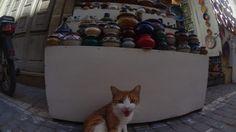 Roar, Essaouria - Morocco
