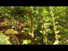 Abandon Shoe- Botanical Romance lyric video - YouTube