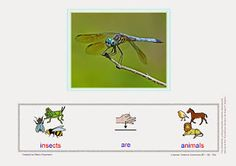 Babel - Free Language/Speech Therapy Resources. (PECS/ Montessori): Making Sentences: Insects