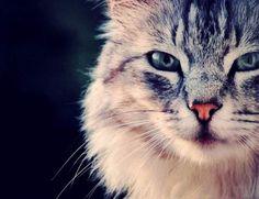 N°14 - Photo du GEOnaute : chloebdelarcoheTrouvez la meilleure assurance pour votre animal de compagnie grâce à ce comparateur en ligne