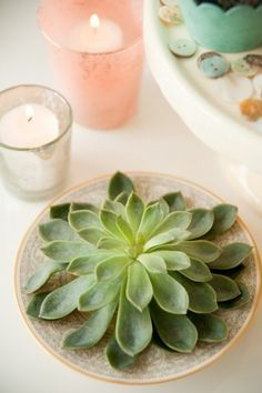succulent wedding centrepiece. Dusty pink, turquoise, and earthy green