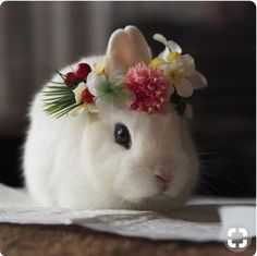 In the event you are searching for a pet that is not just cute, but very easy to keep, then look no further than a family pet bunny. Baby Animals Super Cute, Cute Baby Bunnies, Cute Little Animals, Cute Funny Animals, Cute Babies, Lop Bunnies, Bunny Bunny, Cute Bunny Pictures, Baby Animals Pictures