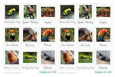 free Animals of South America for the Montessori Wall Map & Quietbook with Printables