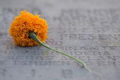 San Miguel de Allende - Mexico Photography by Nick Laborde