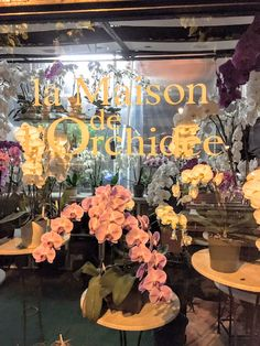 Local de orquídeas en París. Increíble!!!!