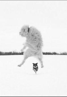 Dog Photography - great shot!