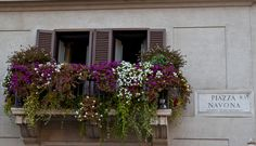 Flowers on the balcony in Navona Square