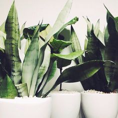 So so pleased and excited to announce our new sister company The Plant Library.  Curated, quality plant rentals for events and gatherings.  Follow all our adventures at @theplantlibrary xxxx