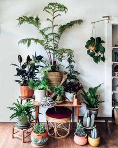 Shop Update: A Pop-up Plant Shop in Montavilla
