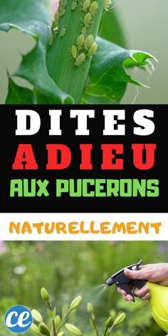 natural insecticide for plants how to make Insecticide For Plants, Natural Insecticide, Garden Terrarium, Garden Plants, Aphid Spray, Get Rid Of Aphids, Aerosoles, Plant Needs, Plantation