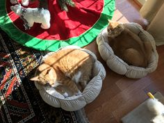 Obviously not a dog but Sonia only has cats.  Cinnamon & Ginger soaking up Christmas sun