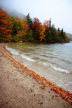 Lakeshore in fall