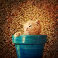 If You Give Me Water, Sunlight And Tuna I Will Grow | Cutest Paw