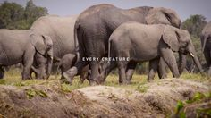 Wildlife trafficking - time to stop it in its tracks